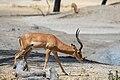 Nature of Tarangire National Park (19).jpg