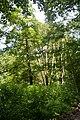 Naturschutzgebiet Haseder Busch - Im Haseder Busch (19).jpg