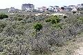 Natuur Zandvoort P1380491.jpg
