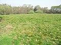 Nea Meadow - geograph.org.uk - 401527.jpg