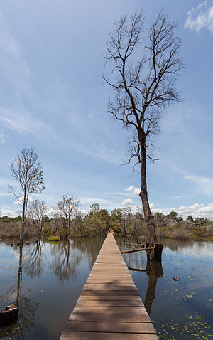Wooden path over a pond to reach the Khmer temple of Neak Pean, an artificial island that belongs to the Angkor temple complex, located today in Cambodia. The Buddhist temple Neak Pean, part of the temple Preah Khan was erected by order of Jayavarman VII in the 12th century.