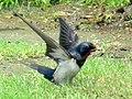 Nesting Time (8716274268).jpg