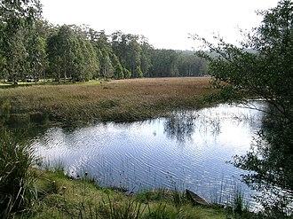 Mummel Gulf National Park - New Country Swamp, Mummel Gulf National Park