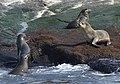 New 0457 Seal Island JF.jpg