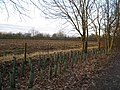 New hedge planting - Farleigh Road - geograph.org.uk - 1713993.jpg