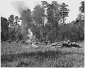 Newberry County, South Carolina. CCC enrollees burning brush on land that has been cleared for bott . . . - NARA - 522779.tif