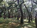 Niji Pine Grove 9.jpg