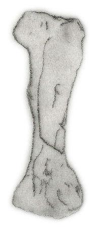 Niobrarasaurus femur.jpg