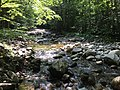 North Branch Gale River August 2018.jpg