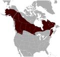 Northern Bog Lemming Synaptomys borealis distribution map.png