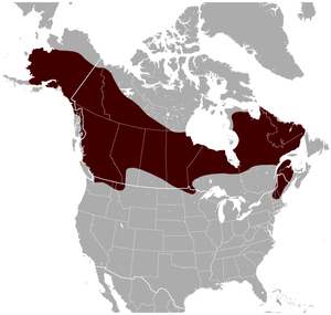Northern Bog Lemming Synaptomys borealis distribution map.png