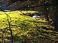 November Green - panoramio.jpg