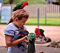OReillys Rainforest Retreat, Queensland, Australia -girl feeding parrots-8.jpg