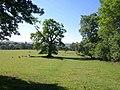 Oak near Milton Lodge - geograph.org.uk - 1925170.jpg