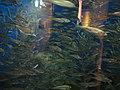 Oga Aquarium 19.jpg