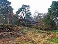 Old Wood of Drum - geograph.org.uk - 618059.jpg