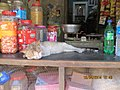 Old cat sleeping in village shop..JPG