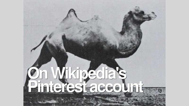 File:On Wikipedia's Pinterest account.webm