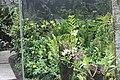 Orchid Garden Bali Indonesia - panoramio (7).jpg
