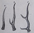 Ottův slovník naučný - obrázek č. 3055.JPG