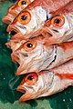 Oweston sting fish for sale at Tsukiji Fishmarket, Tokyo-30.jpg