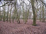 Oxleas Wood - geograph.org.uk - 1134186.jpg