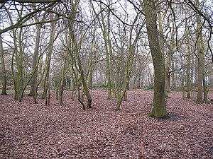 Oxleas Wood - Image: Oxleas Wood geograph.org.uk 1134186