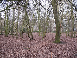 area of ancient deciduous forest in the Royal Borough of Greenwich, London