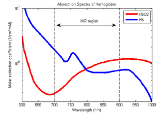 Pulse oximetry - Absorption spectra of oxygenated hemoglobin (HbO2) and deoxygenated hemoglobin (Hb) for red and infrared wavelengths