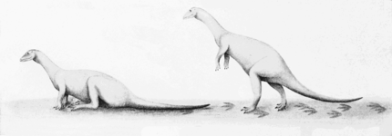 PSM V66 D149 Herbivorous dinosaurs reconstructed by footprint data.png
