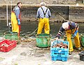 Packing the catch - geograph.org.uk - 827536.jpg