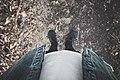 Pair of shoes in Belfairs Woods (Unsplash).jpg