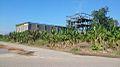 Palm Sugar Processing Plant 2 - Wong Sa Wah.jpg
