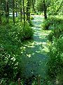 Parc-nature du Bois-de-l-ile-Bizard 27.jpg