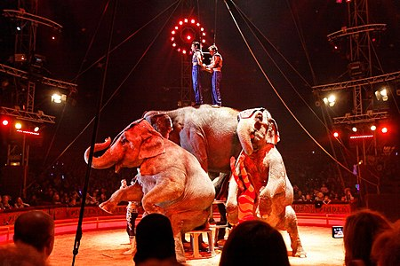Paris - Cirque Pinder - Joe Gartner - Les éléphants - 027.jpg