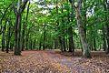 Park w Tychowie (8).JPG