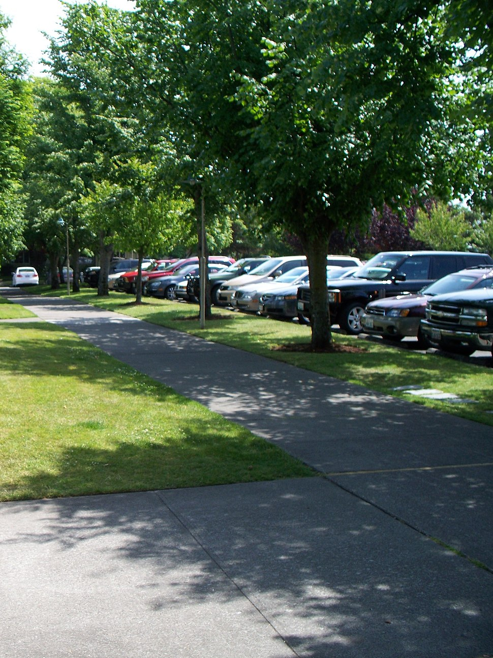 Parking lot landscaped with trees