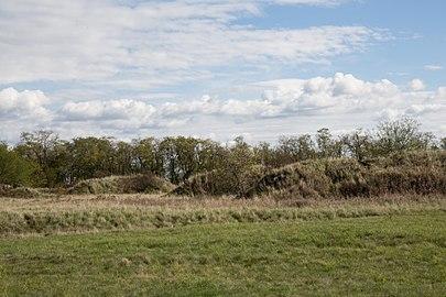 Parndorfer Heide NSG20 005.jpg