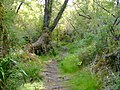 Parque Nacional Chiloé-planchado antiguo.jpg