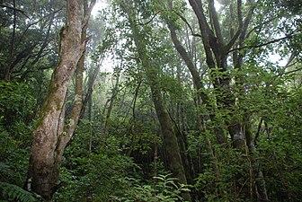 Parque Nacional Garajonay 2.jpg