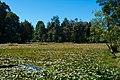 Parque Saval Valdivia 20190217 01.jpg