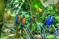 Parrots, Moody Garden, Galveston, Texas (6151937580).jpg