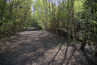 Partington - The overgrown remains of Partington railway station, which closed in 1964