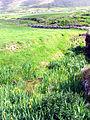 Pasture at Dunquin - geograph.org.uk - 16763.jpg