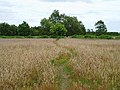 Path through the grass - geograph.org.uk - 192223.jpg