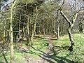 Path through the plantation, Ogden - geograph.org.uk - 1247704.jpg