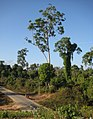 Pathein and Irrawaddy Delta scenery 15.jpg