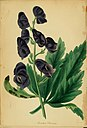 Paxton's Magazine of Botany and Register of Flowering Plants (1838) (14578393927).jpg