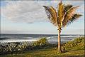 Paysage de lîle de la Réunion (4118136176).jpg