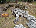 Petrified Forest - Stierch D.jpg